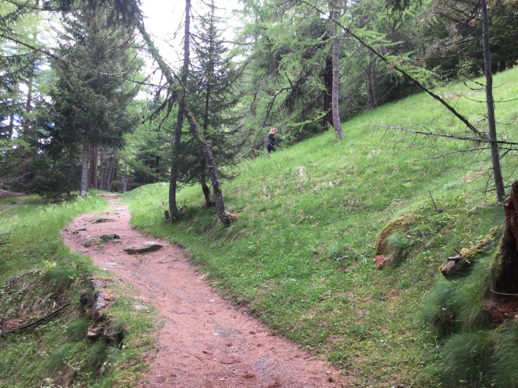 Bel sentiero