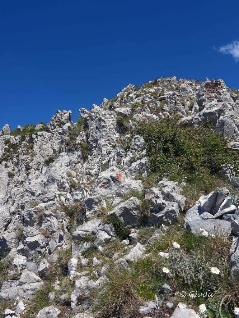 La parte finale di roccette