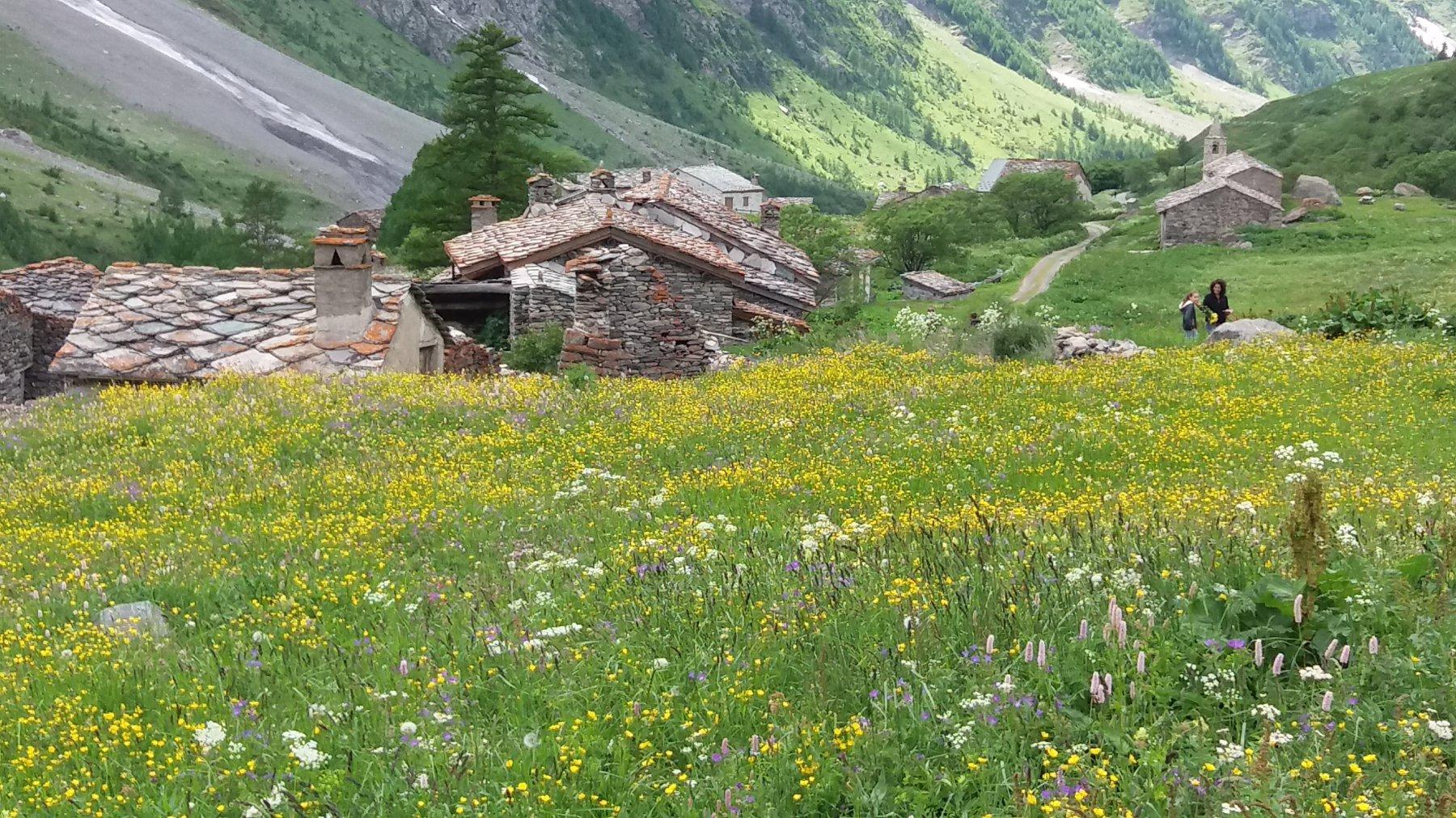 Bella fioritura ad Averole