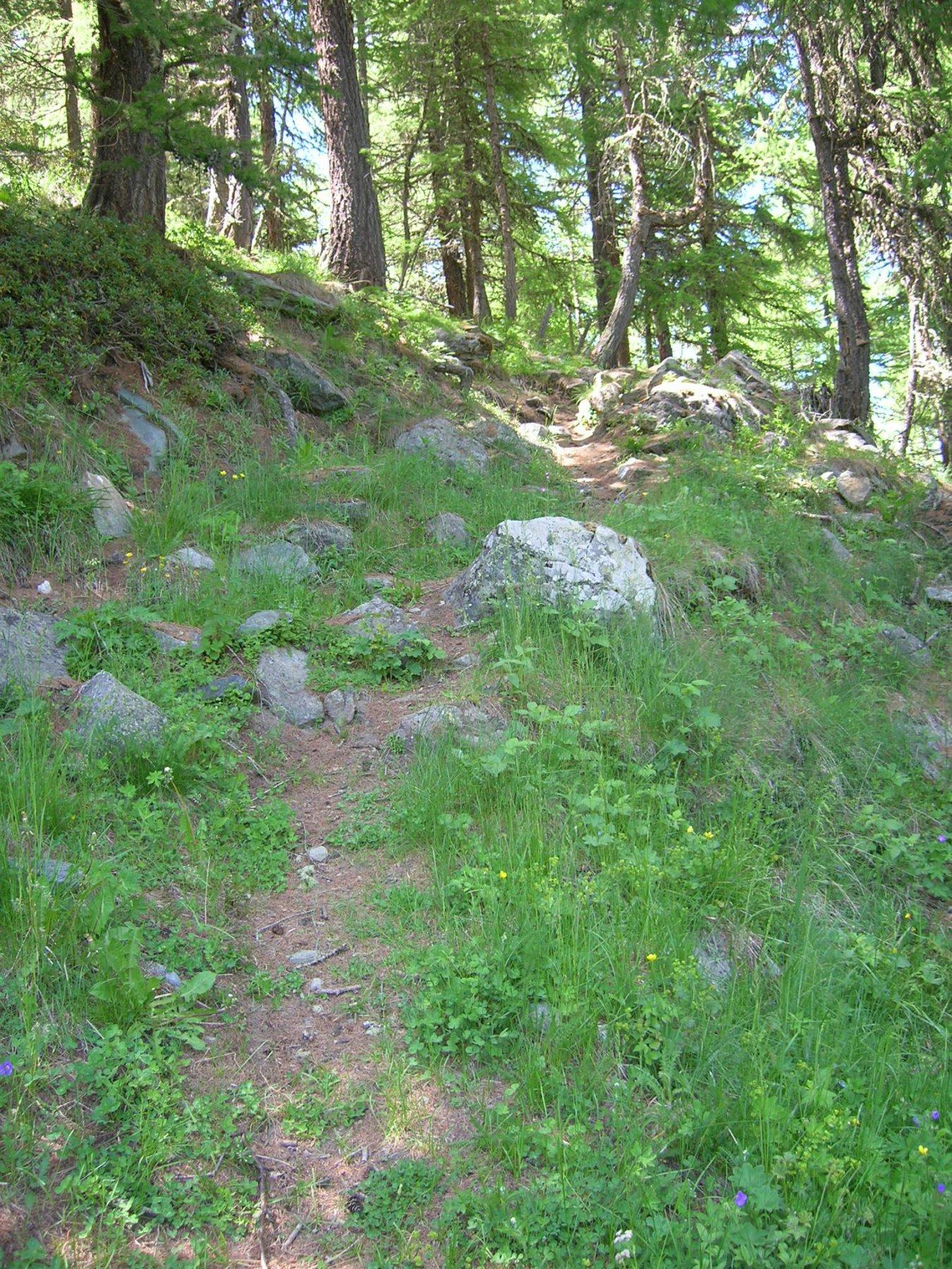 il tratto nel bosco