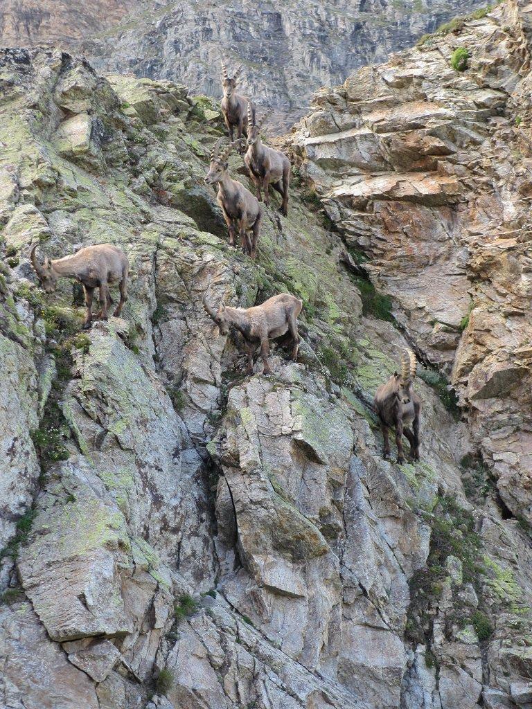 Giovani  alpinisti