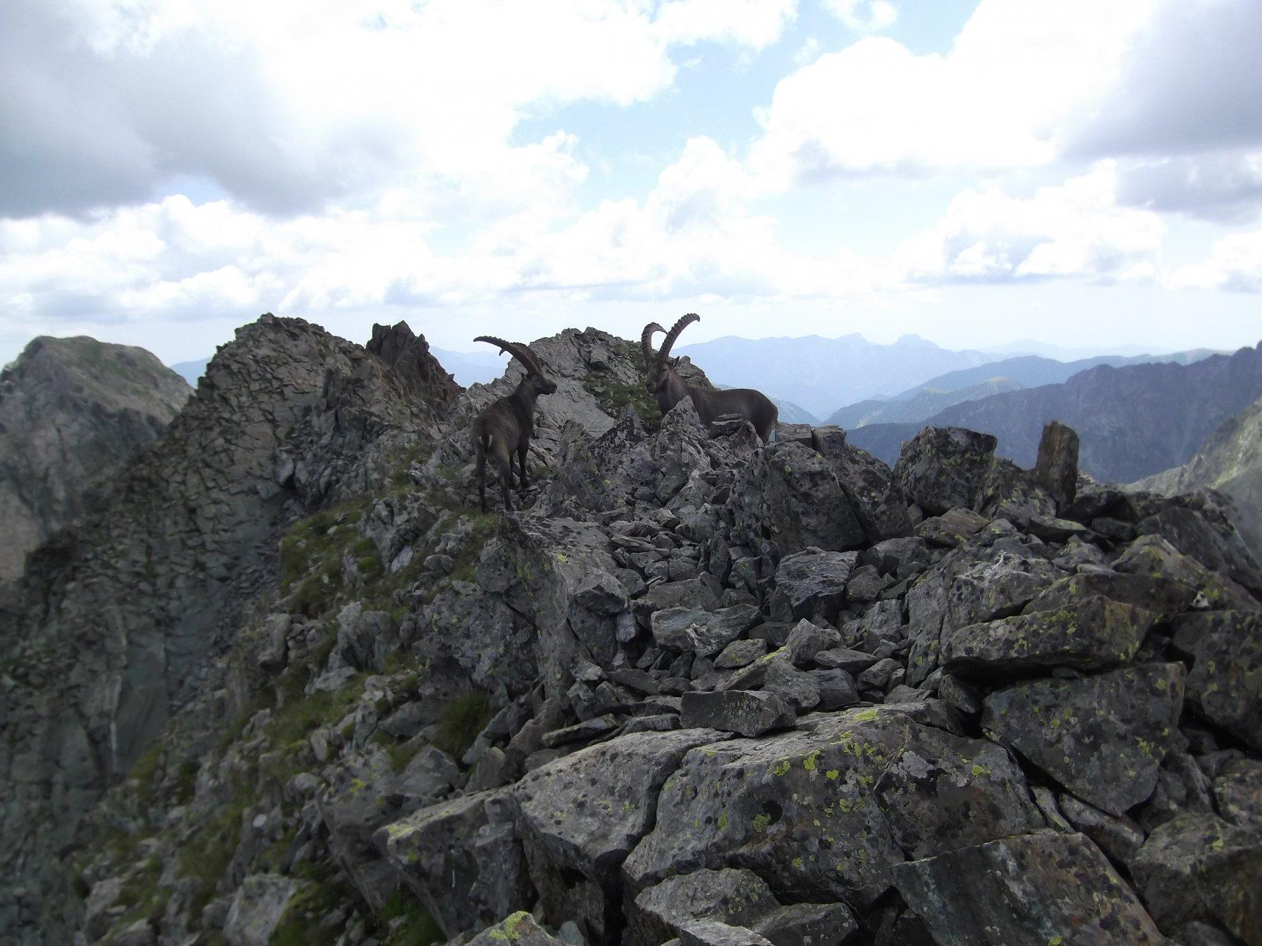 La cresta da percorrere con in fondo a sx la Cima di Vernasca.