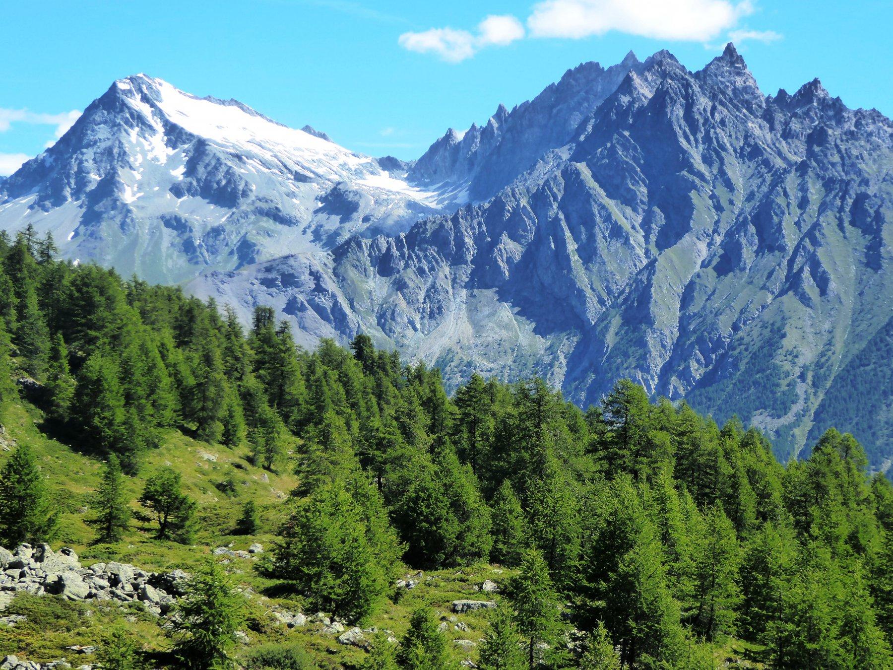 Il Mont Gelè dal bosco di larici