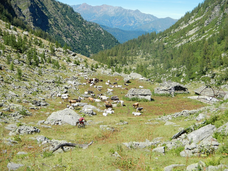 Alpe Cialancia