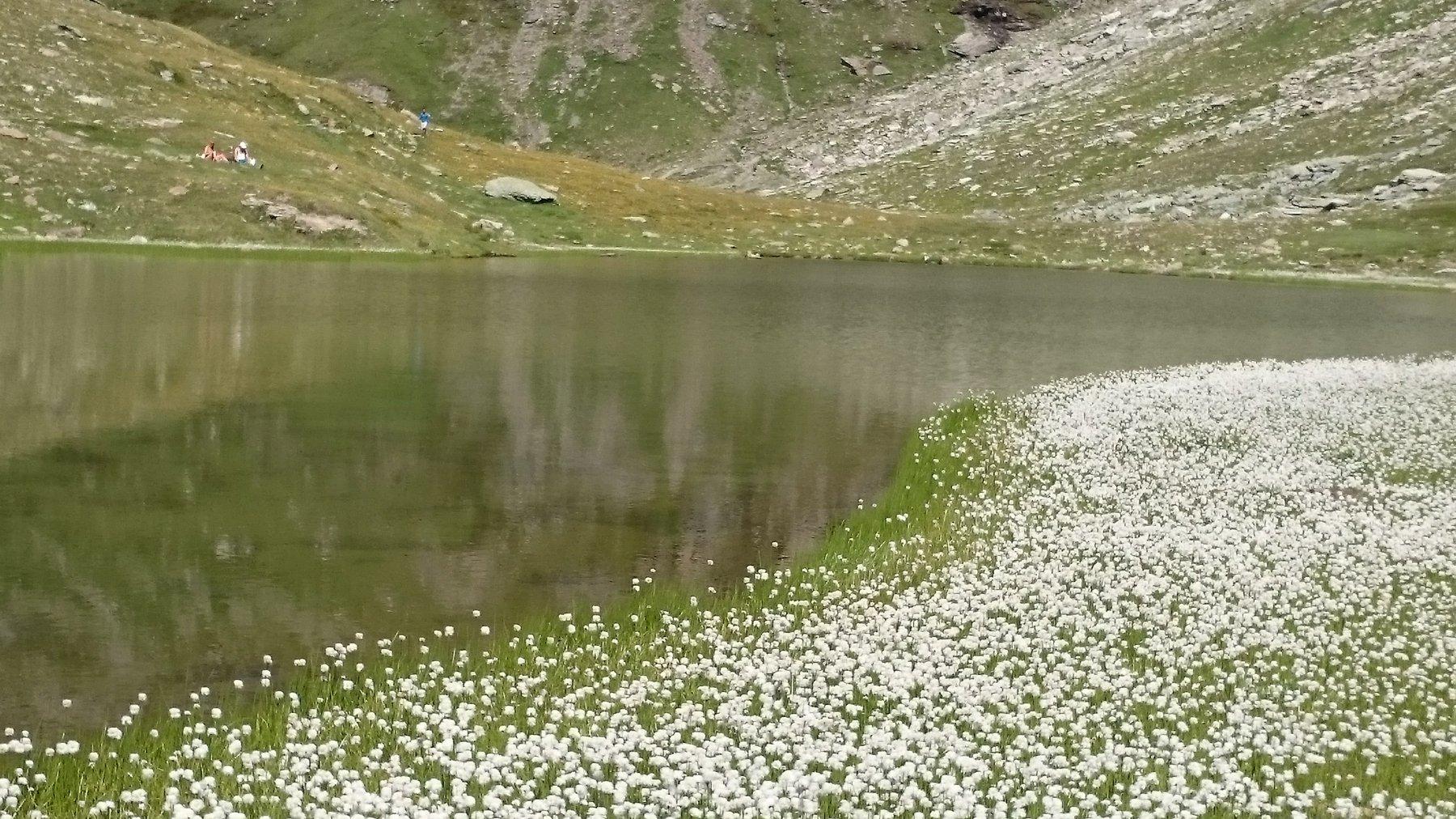 fioritura al lago Pinter