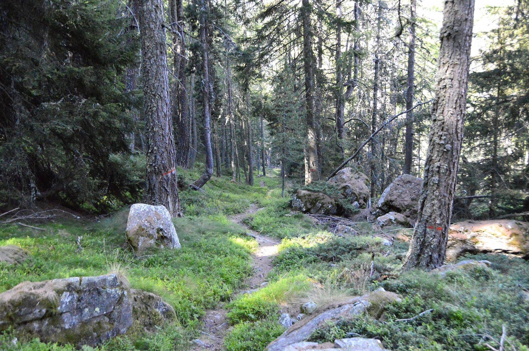 Primo tratto nel bosco