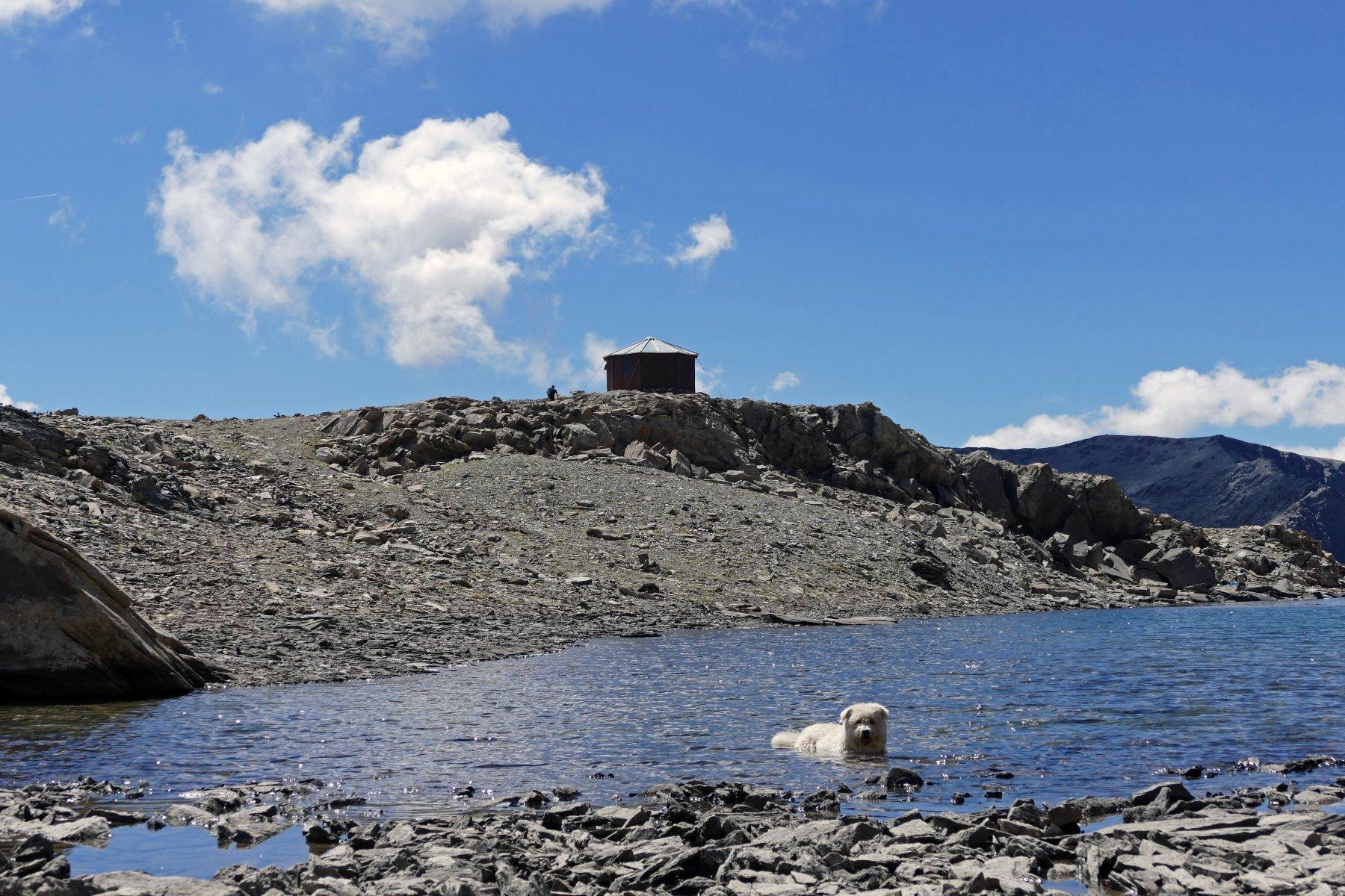 Buck fa il bagno nel lago Mongioia, dietro il bivacco Boerio
