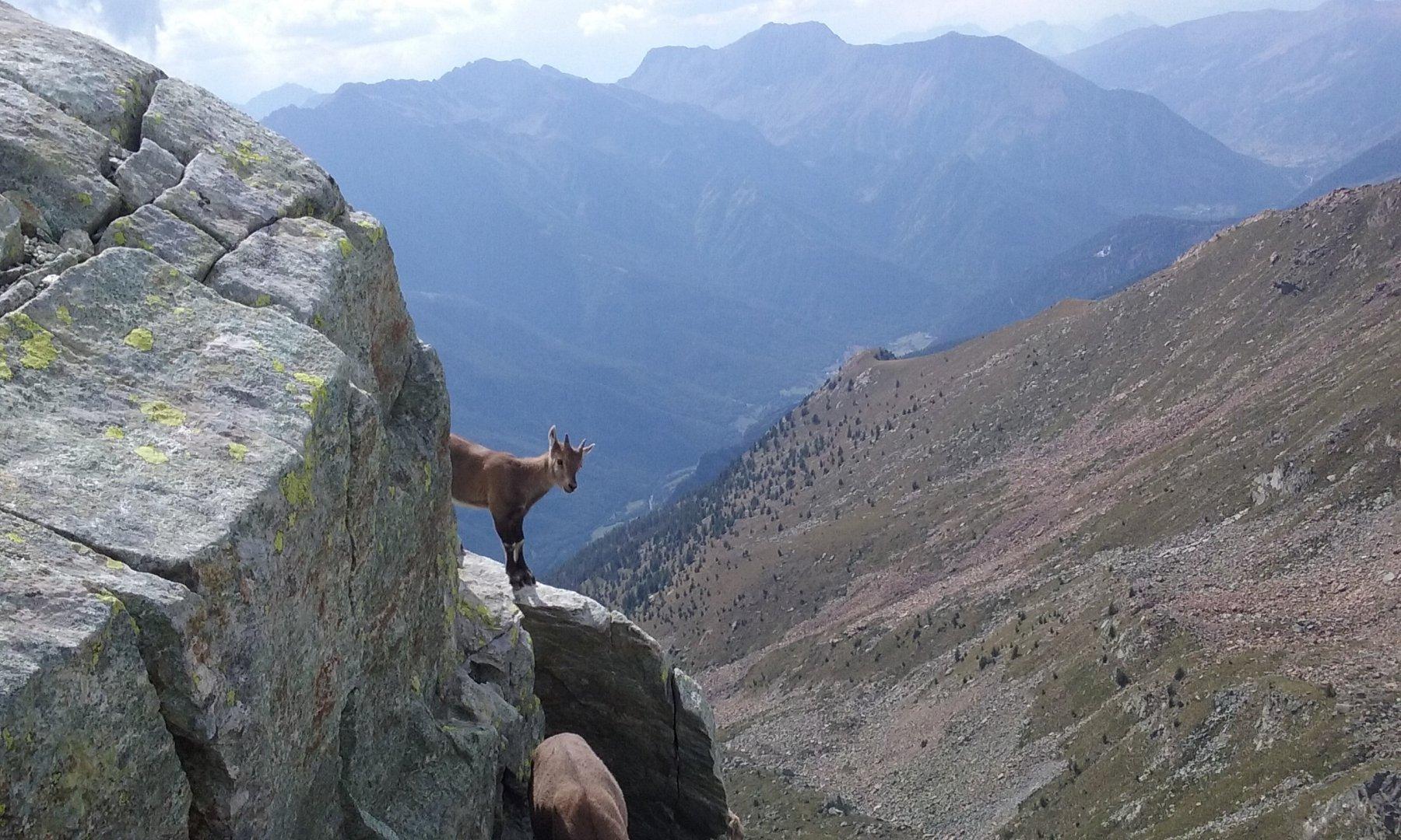 Cucù sul Monte Robinet