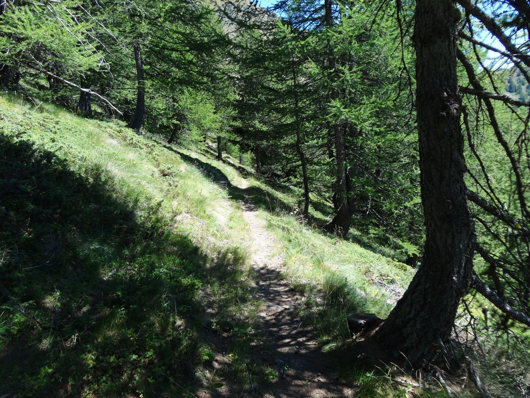 il sentiero 1