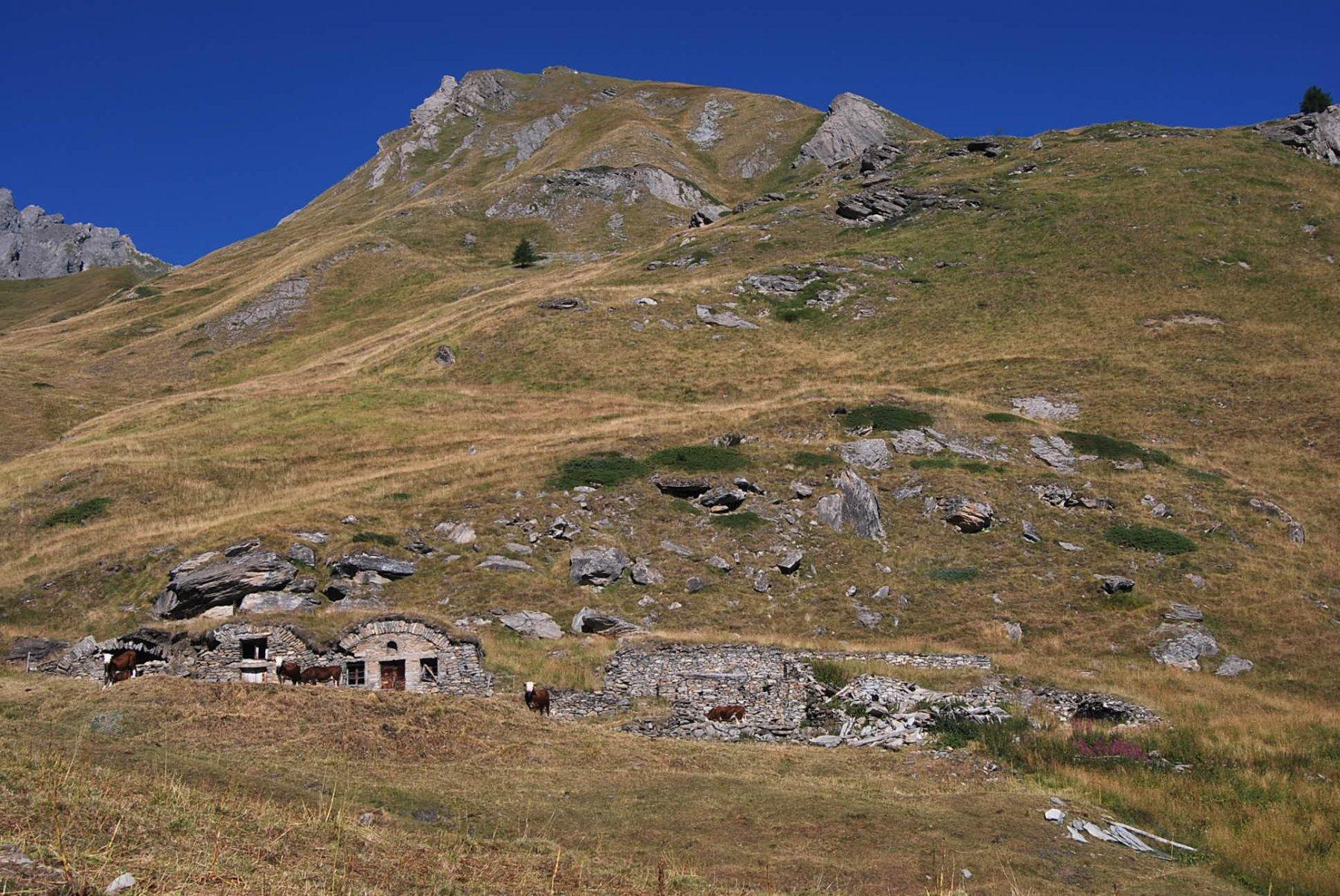 Crevacol (Testa di) da Planaval, traversata a Pra Farcoz per i colli Serena, Ceingles, Saint Rhemy 2016-08-27