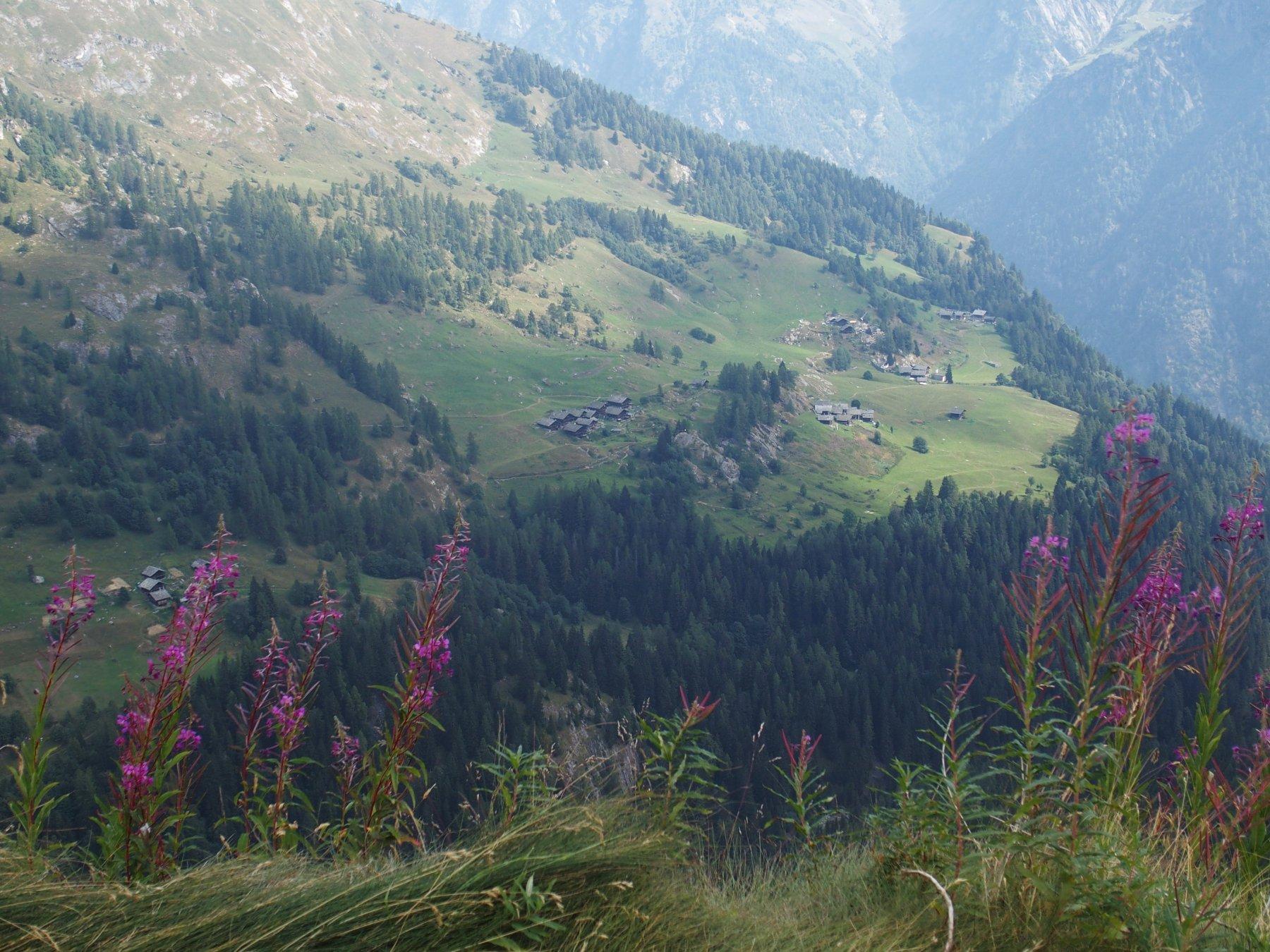 Vista sulla Val d'Otro ed i villaggi Walser dall'Alpe Tailly
