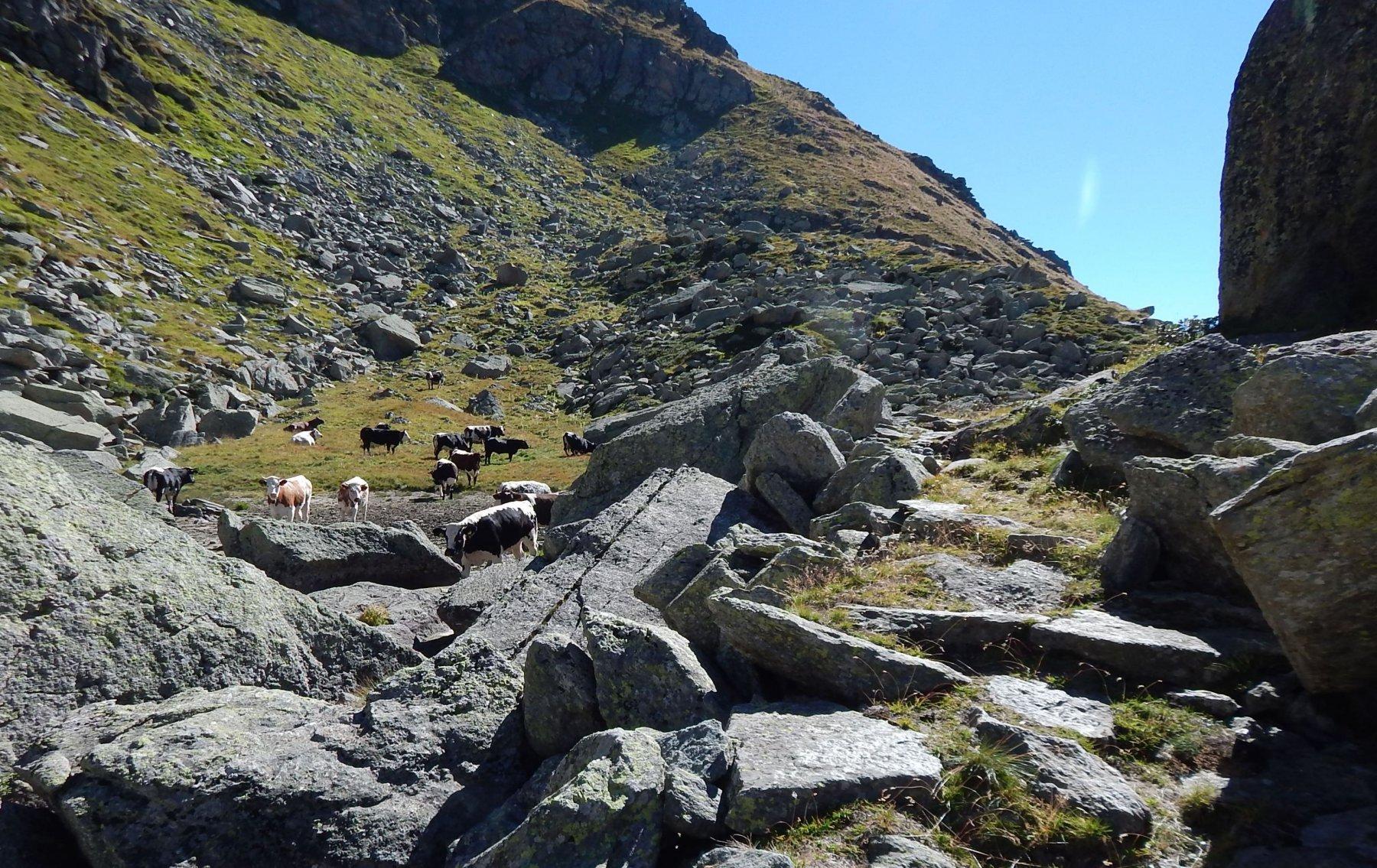Sopra l'alpe gias Massa