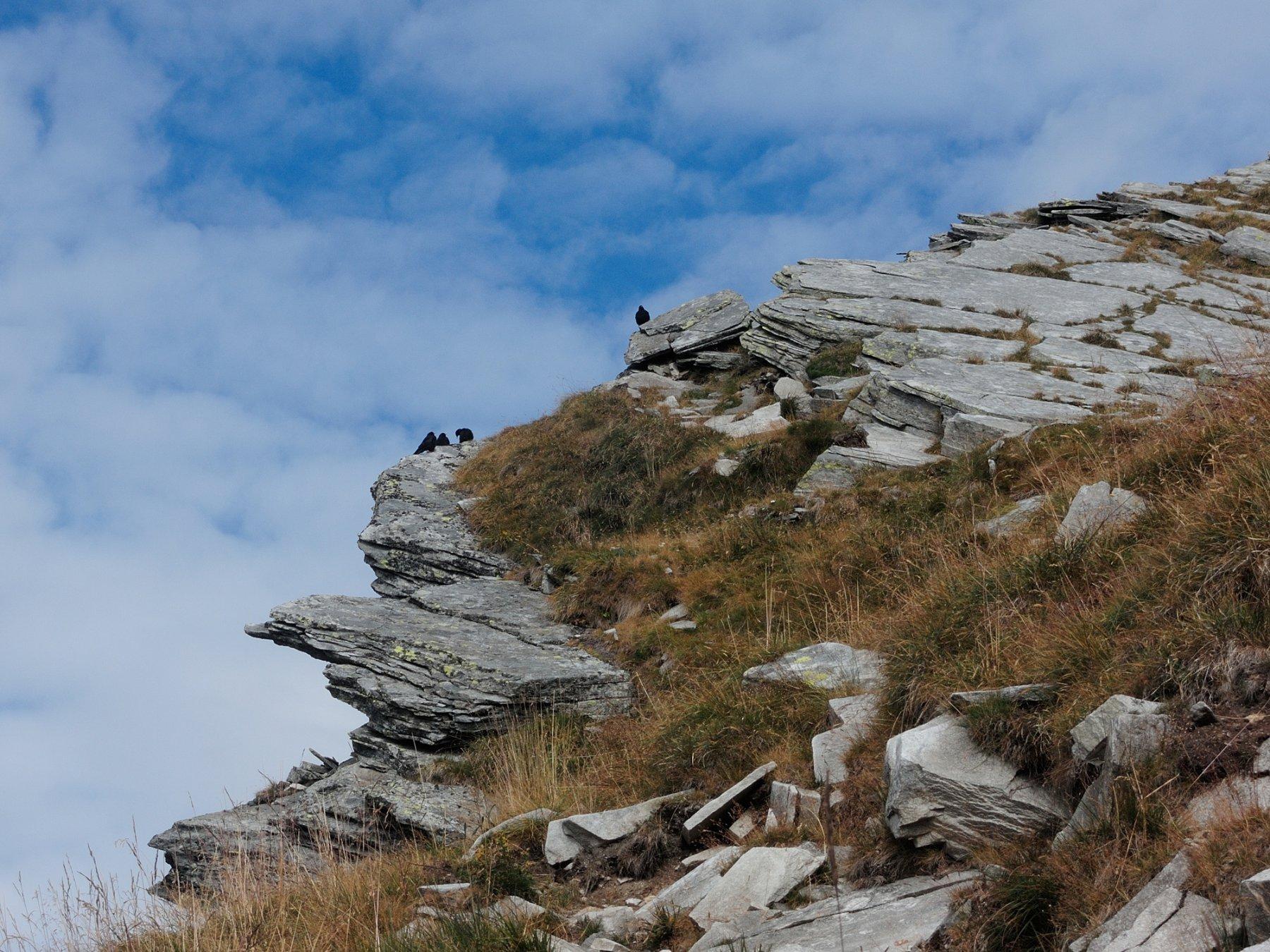 Gracchi alpini ci aspettano sulla cresta verso l'antecima