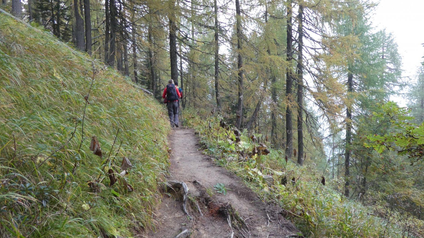 risalendo il bosco iniziale sopra il Rifugio Prati di Croda Rossa