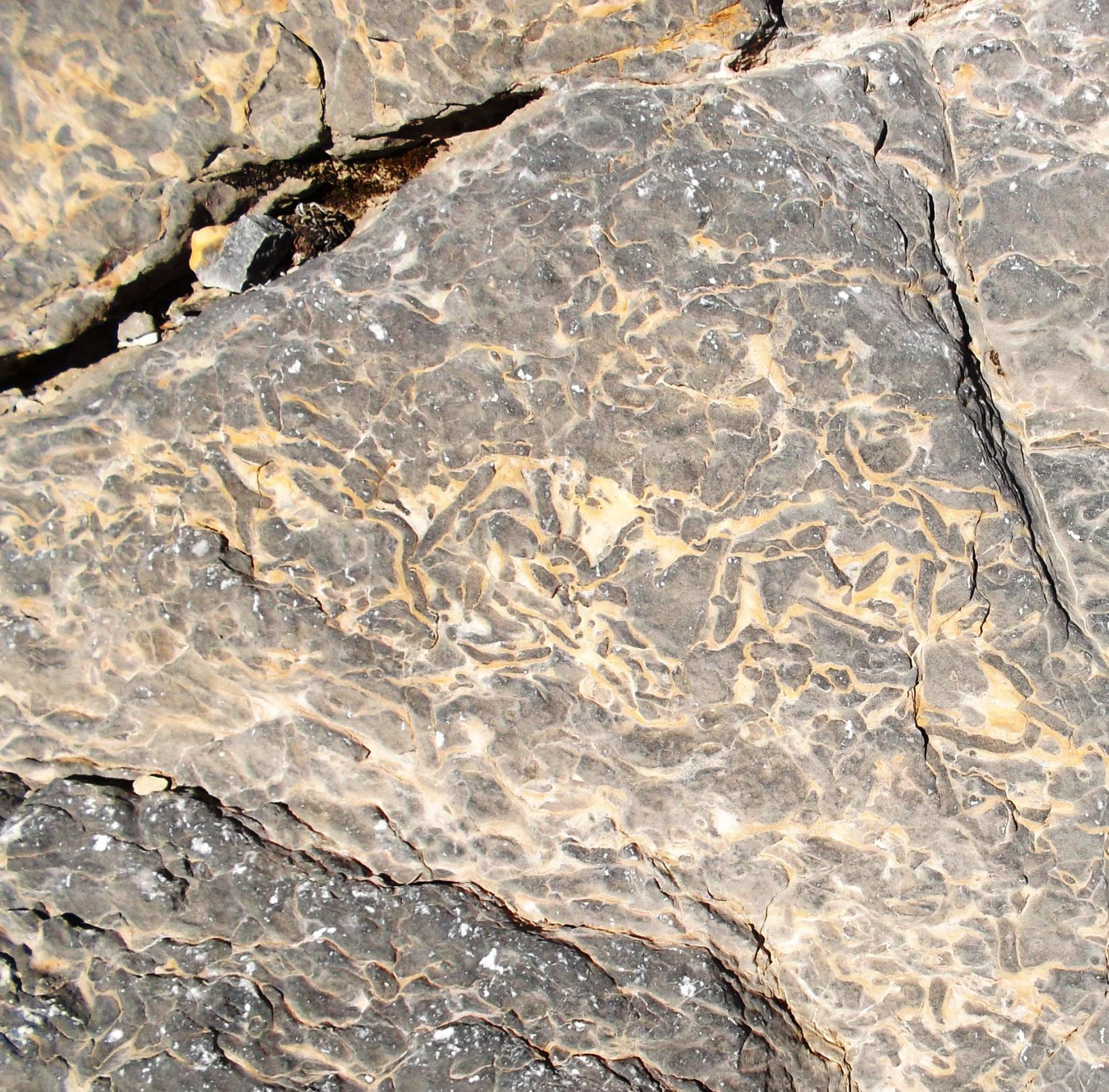 Tracce fossili di vermi marini vissuti nell'antico fondale melmoso ora trasformato in scura roccia