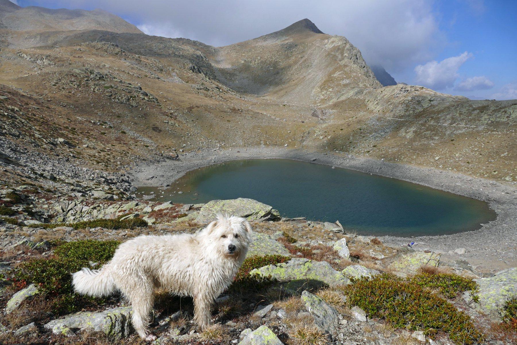 Buck  e uno dei pittoreschi laghi di Collalunga