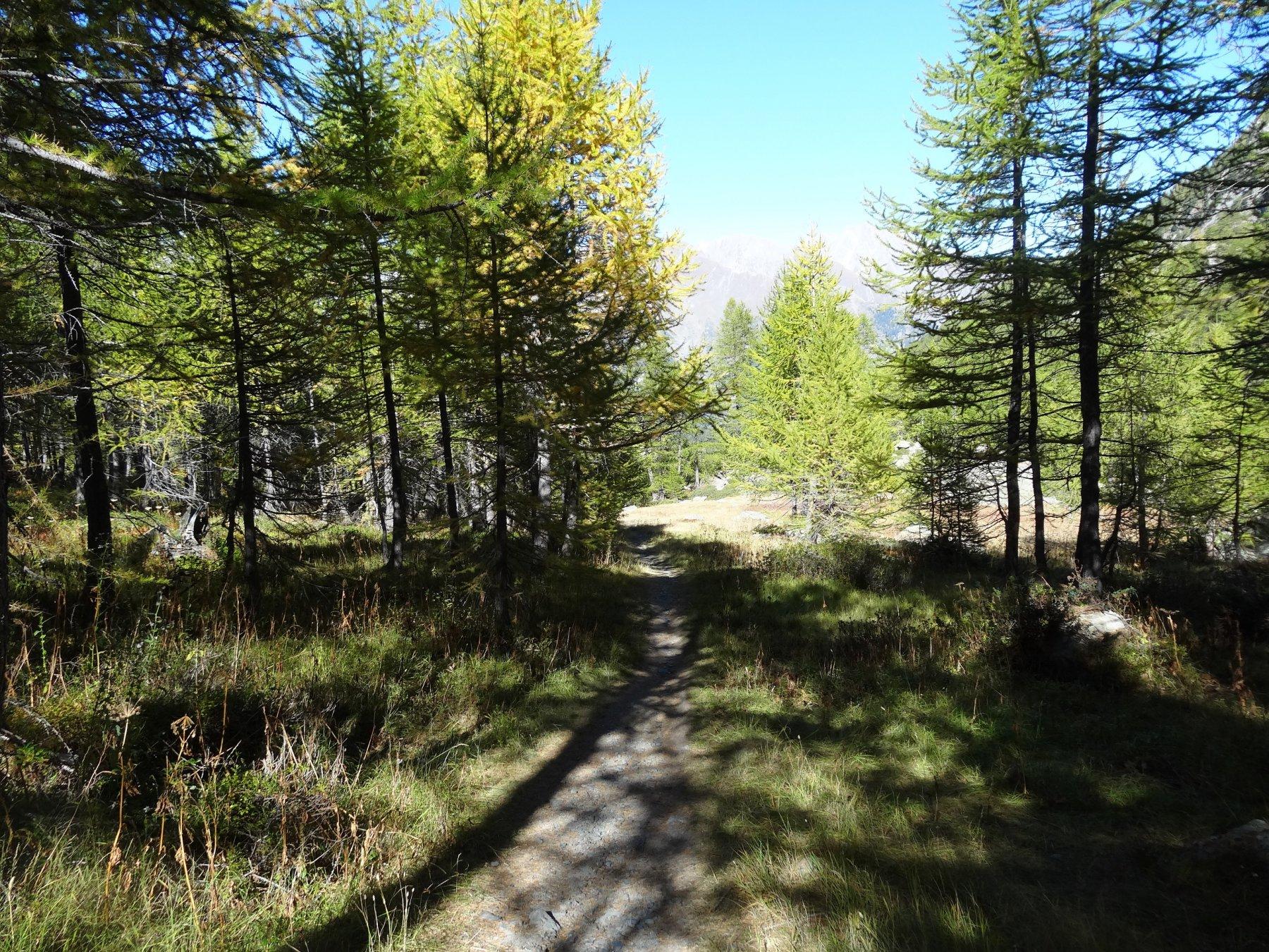 il sentiero 14 verso arpy