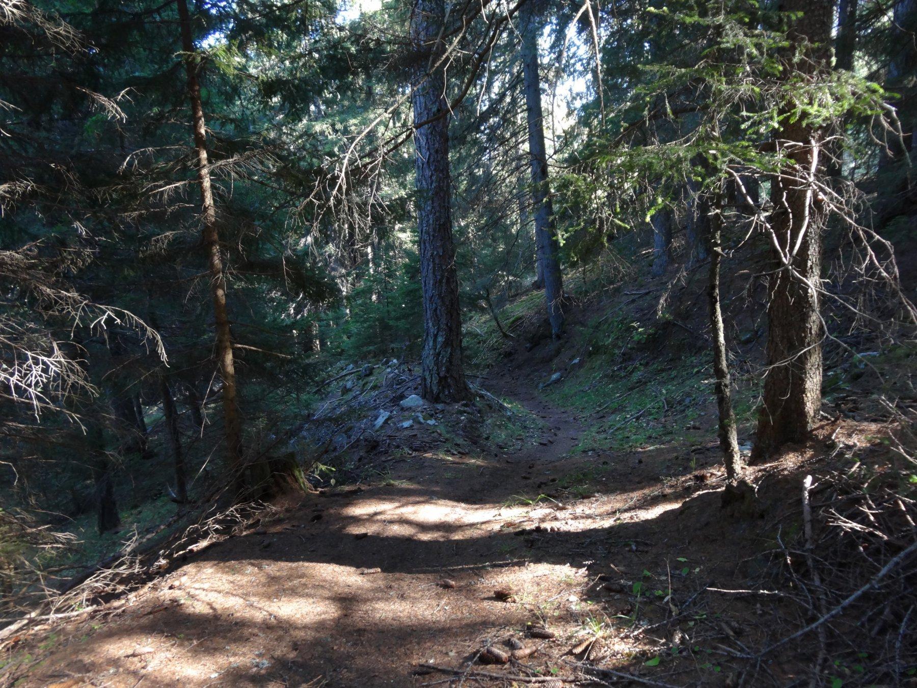 il bel sentiero nel bosco dopo goubelin