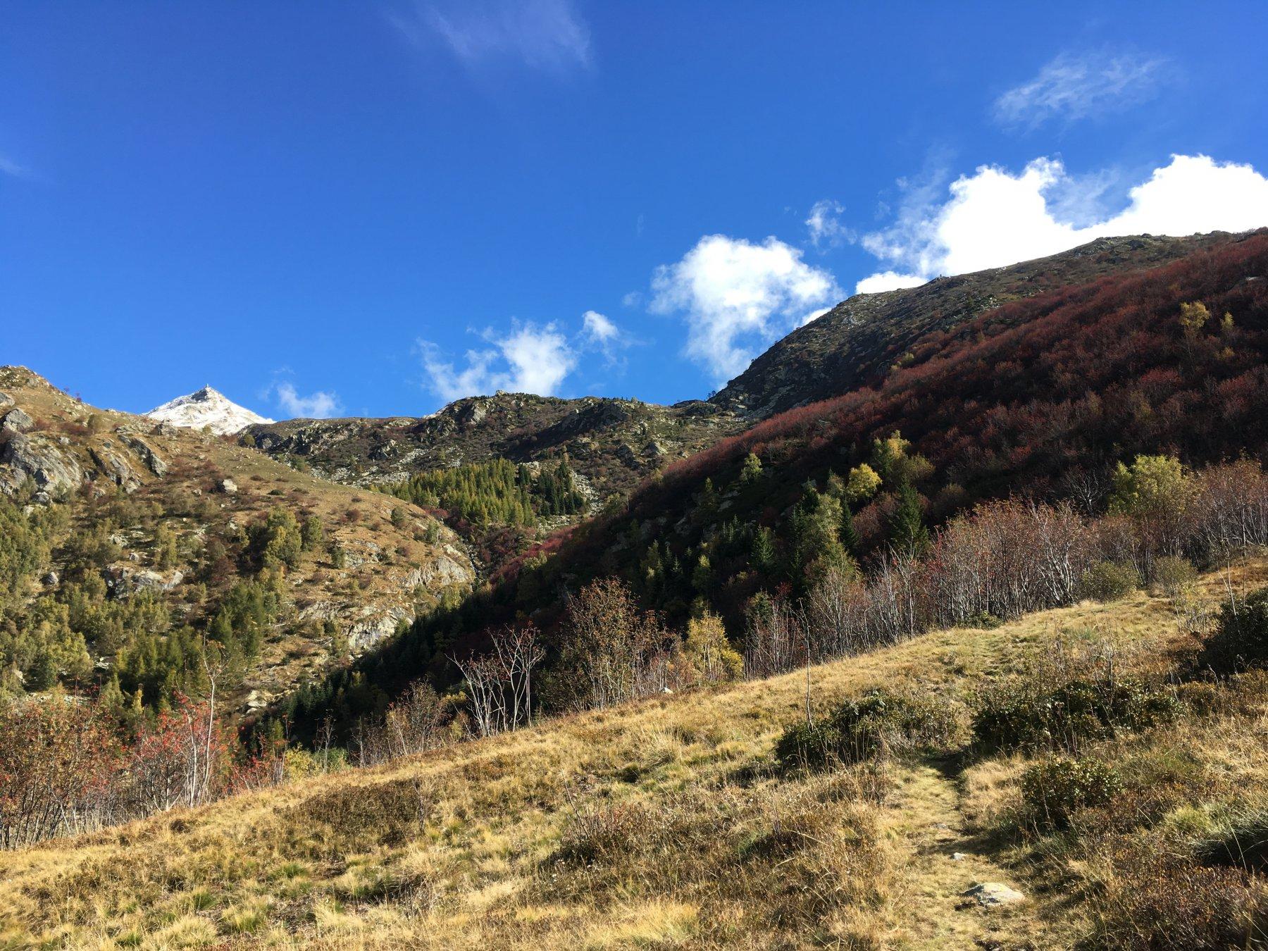 dall'alpe Buri verso la cima