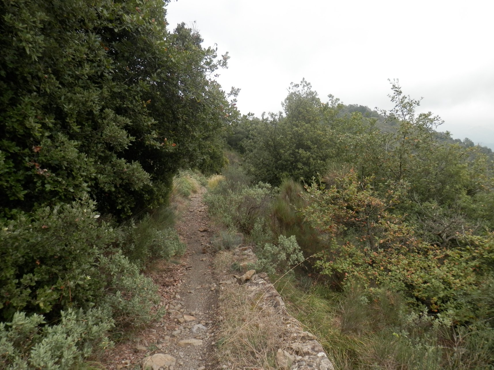 Gouta (Sella) da Dolceacqua, giro 2016-10-20
