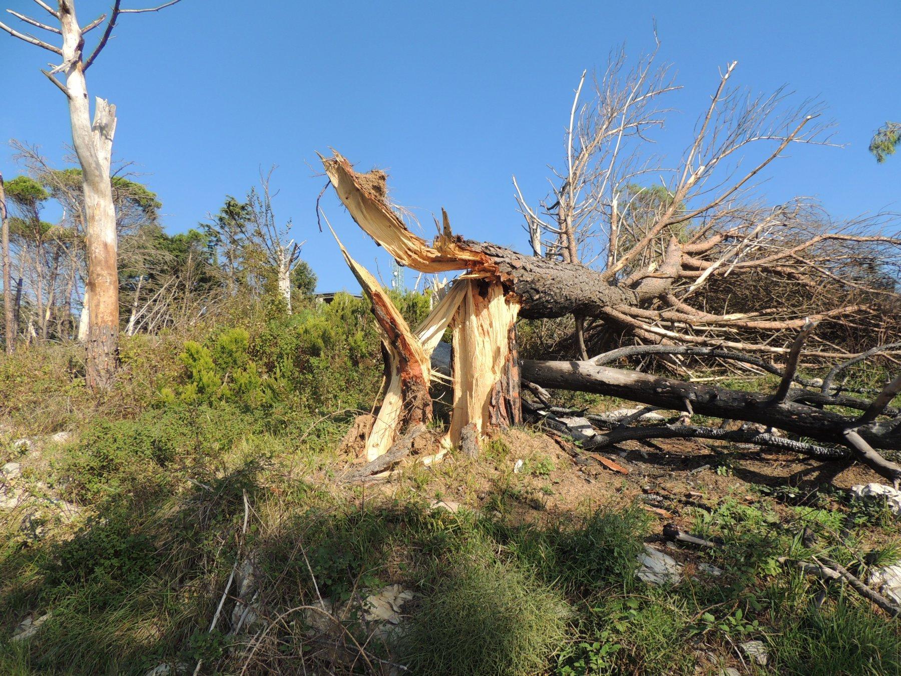 alberi distrutti dalla tromba