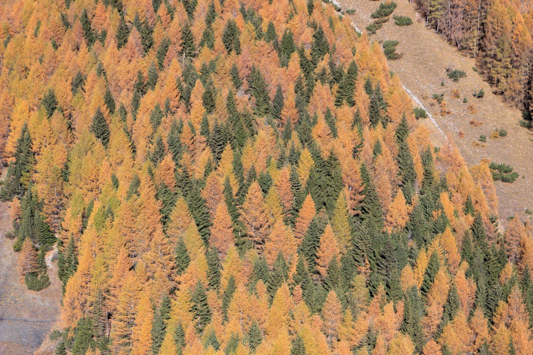I magici colori dell'autunno