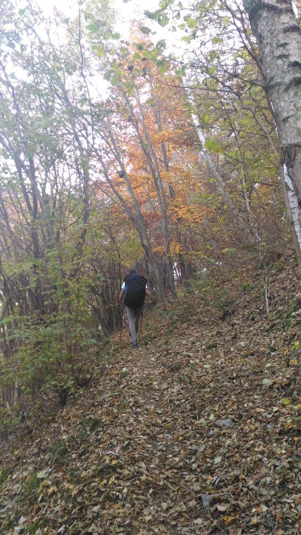 Salendo nel bosco