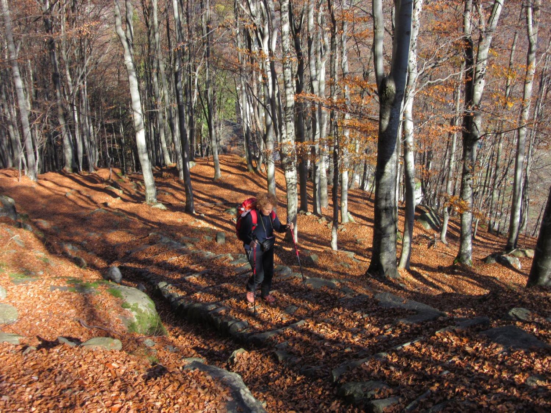 Molte foglie sul percorso ...
