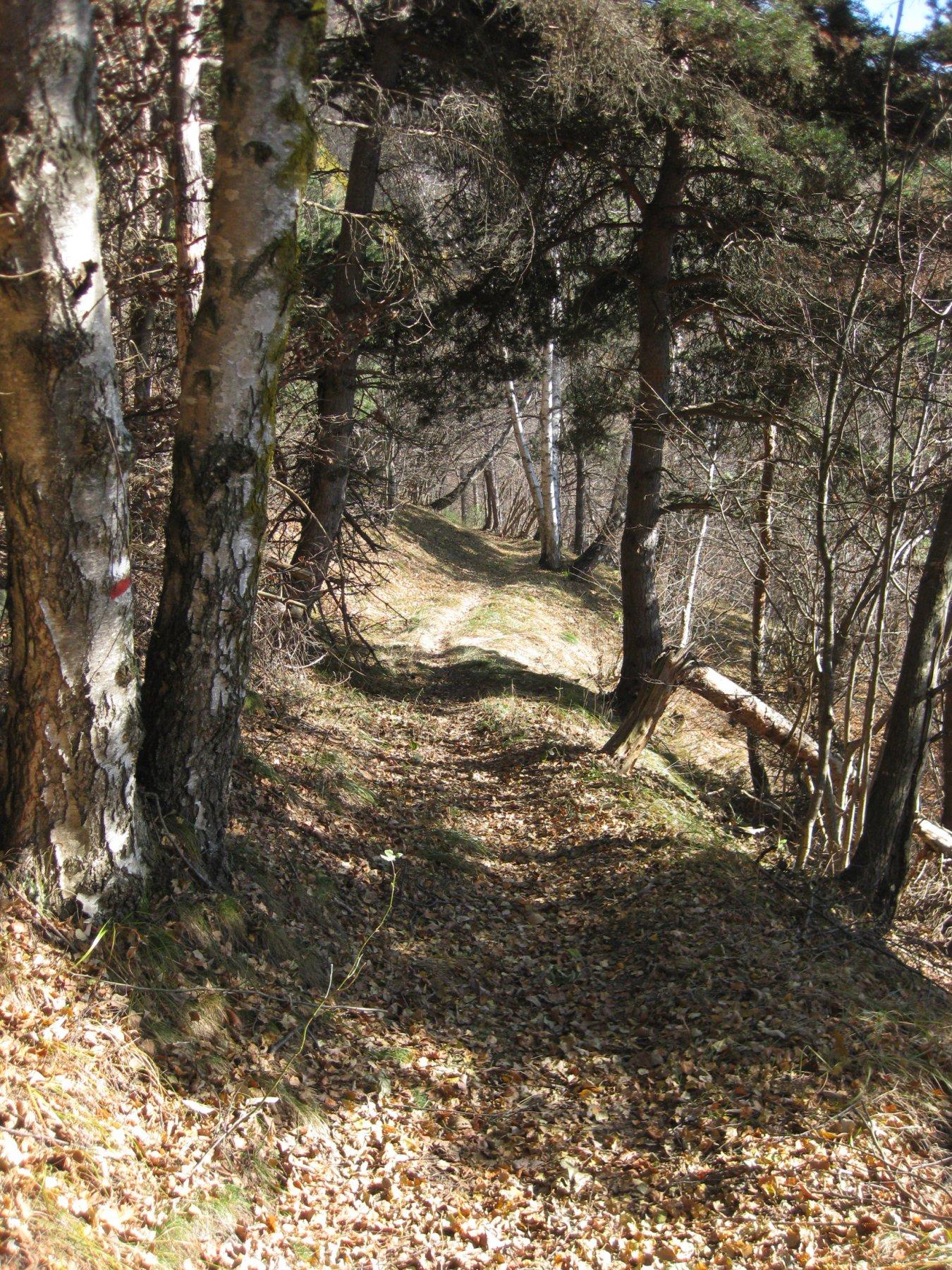 Bel sentiero nel bosco