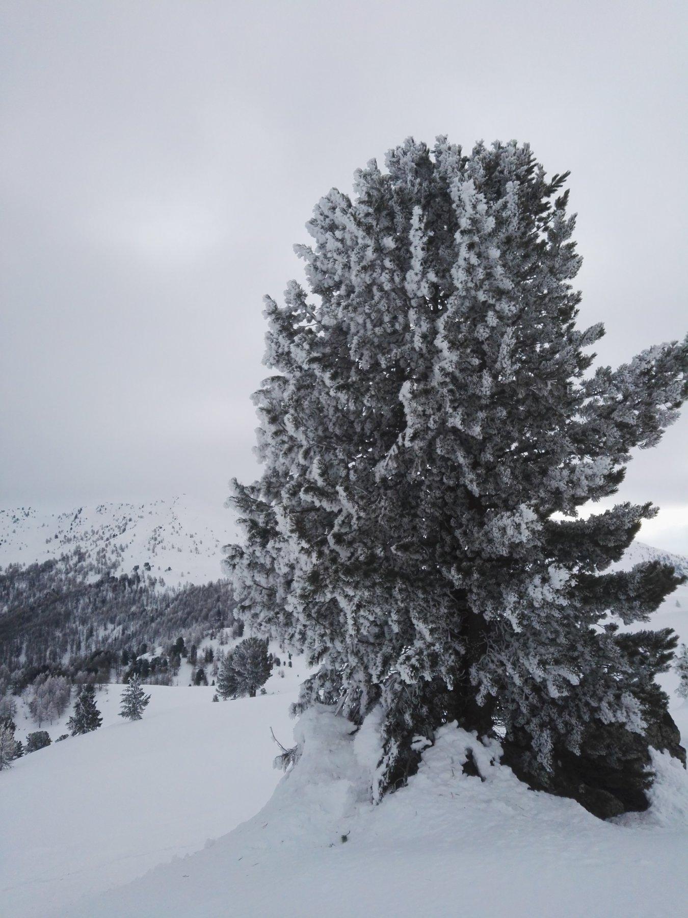 Carico di.neve