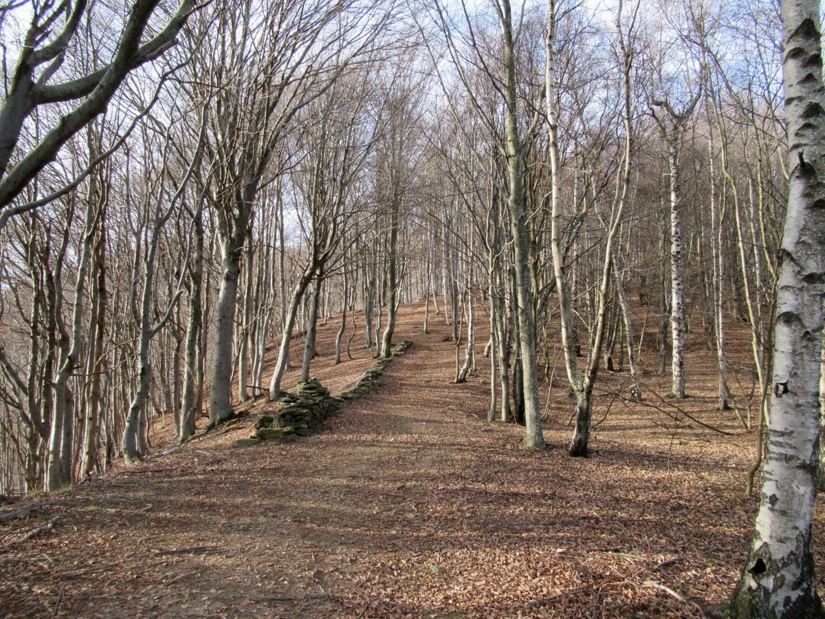 Un tratto del sentiero n. 205 nel bosco