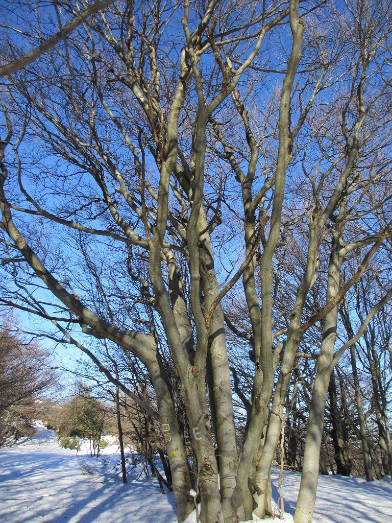 Segnaletica su alberi verso l'Ermetta