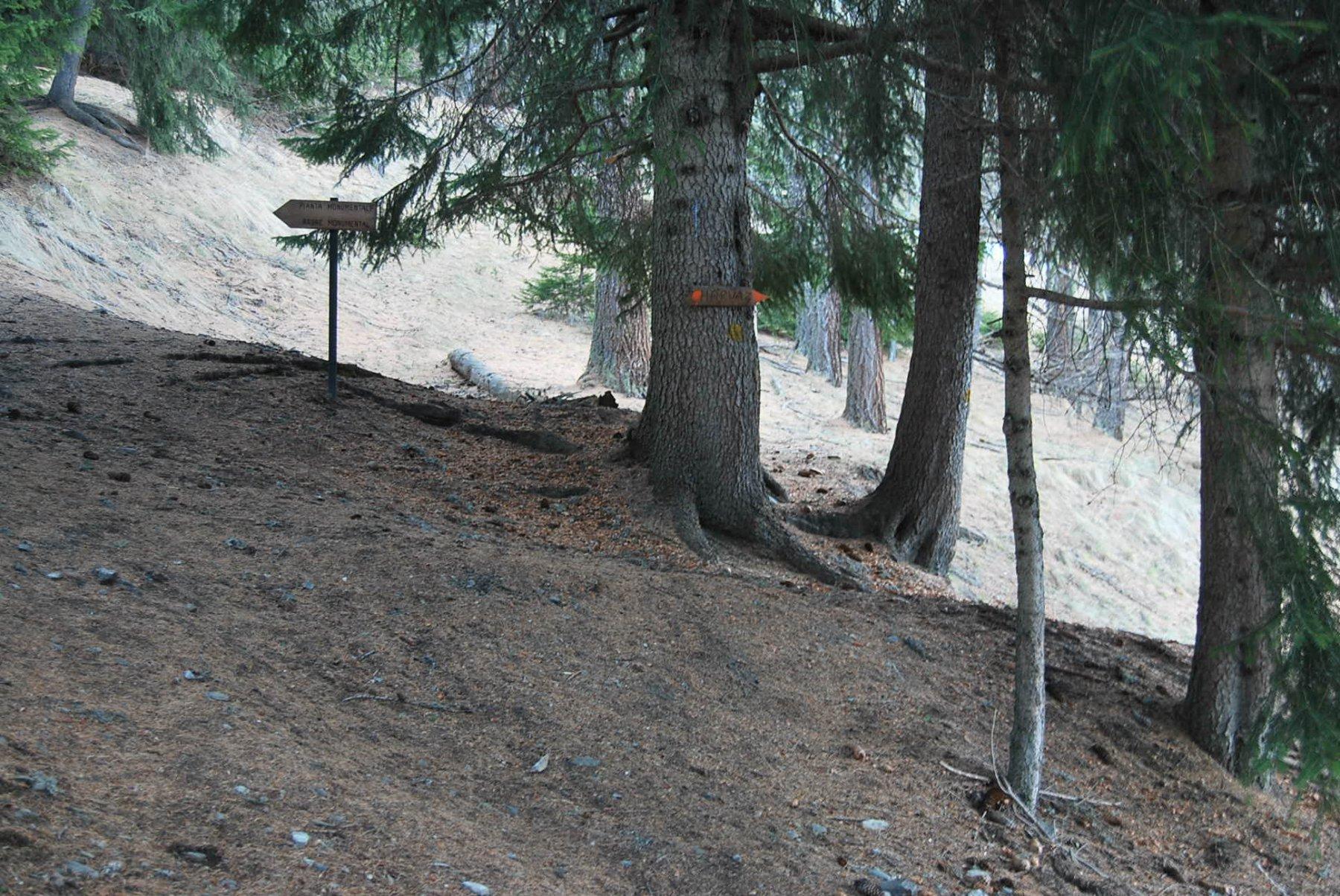Allo scavalcamento del costone, dove si incontrano le indicazioni per Charvaz e Col du Bard