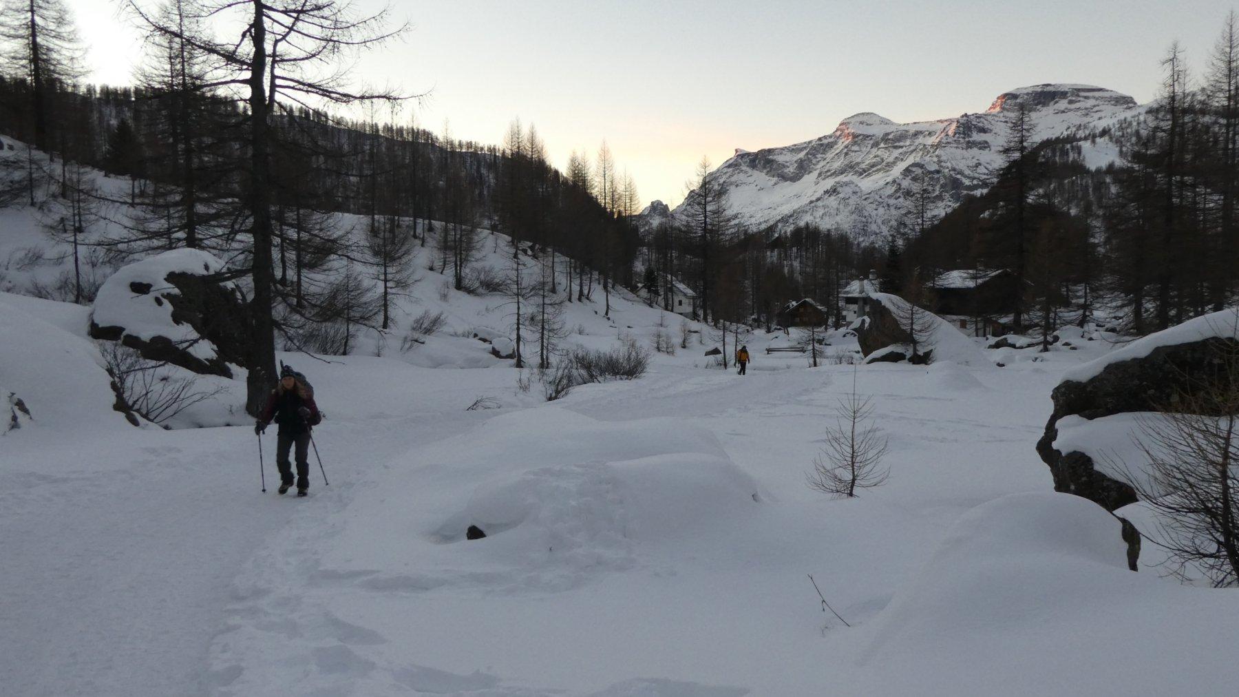 salendo nel pianoro verso l'Alpe Campello