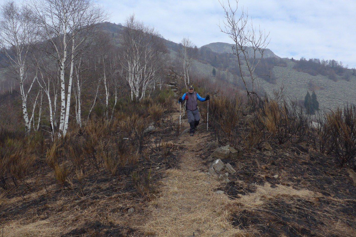 Scendendo , fra i resti di un recente incendio