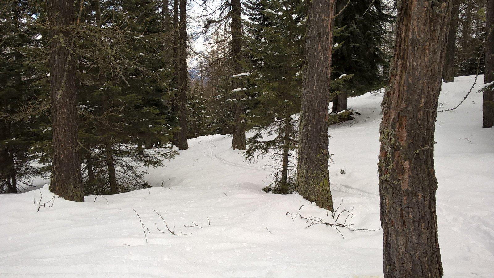 traccia nel bosco