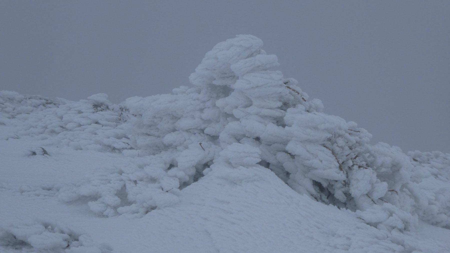 roccette incrostate di neve e ghiaccio poco prima della vetta del Monte Belvedere