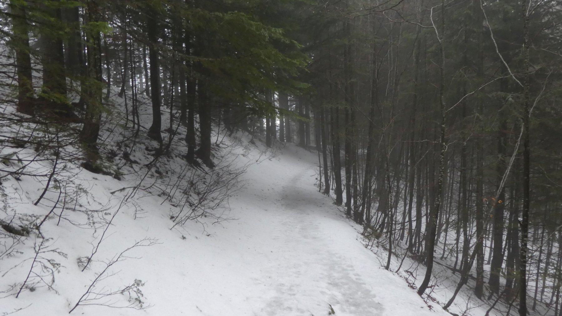 attraversando il boscoso Monte Maiori