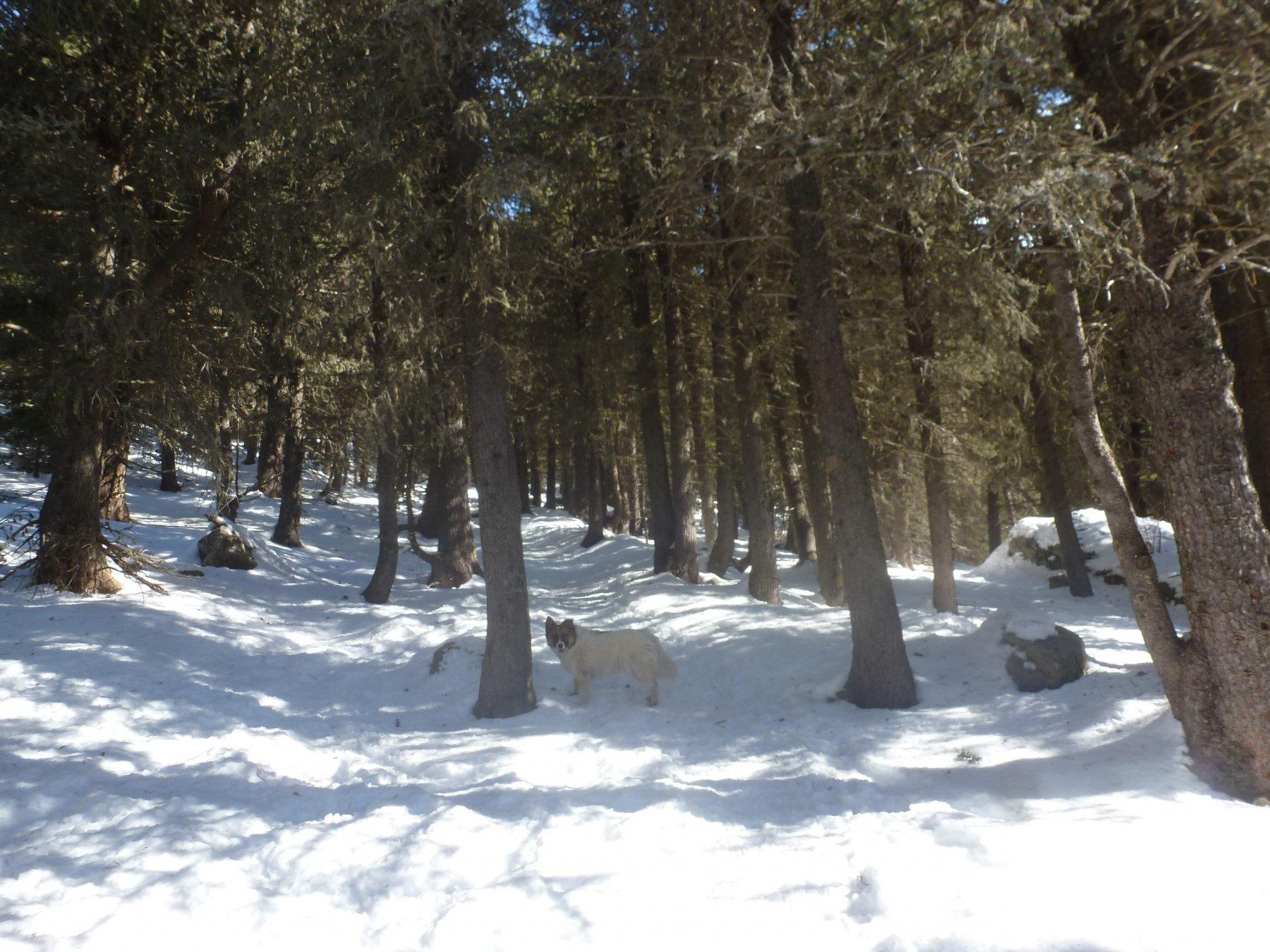 bellissimo bosco