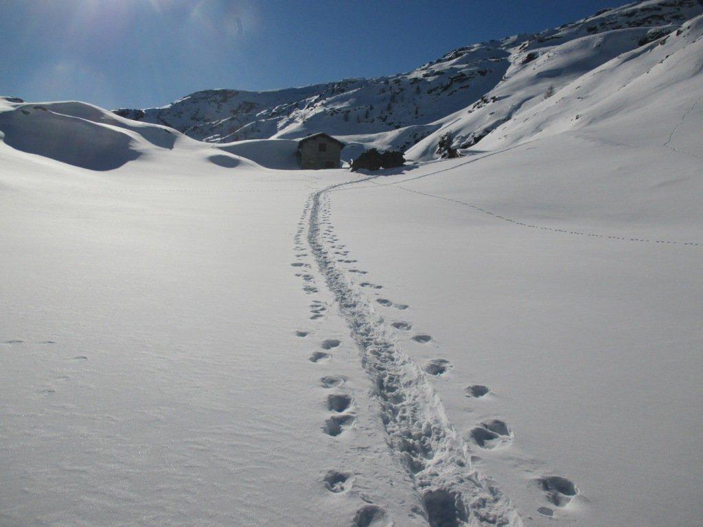 verso l'alpe del Servizio Alta