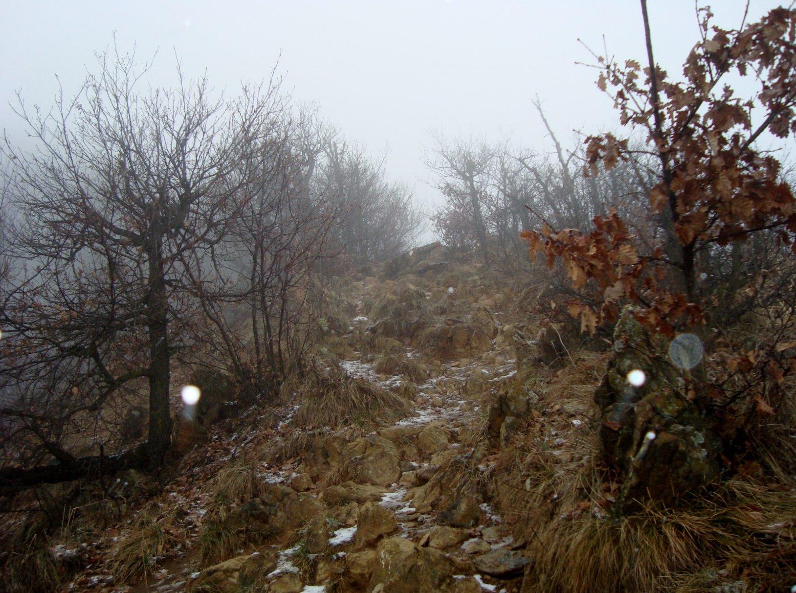 un tratto di sentiero