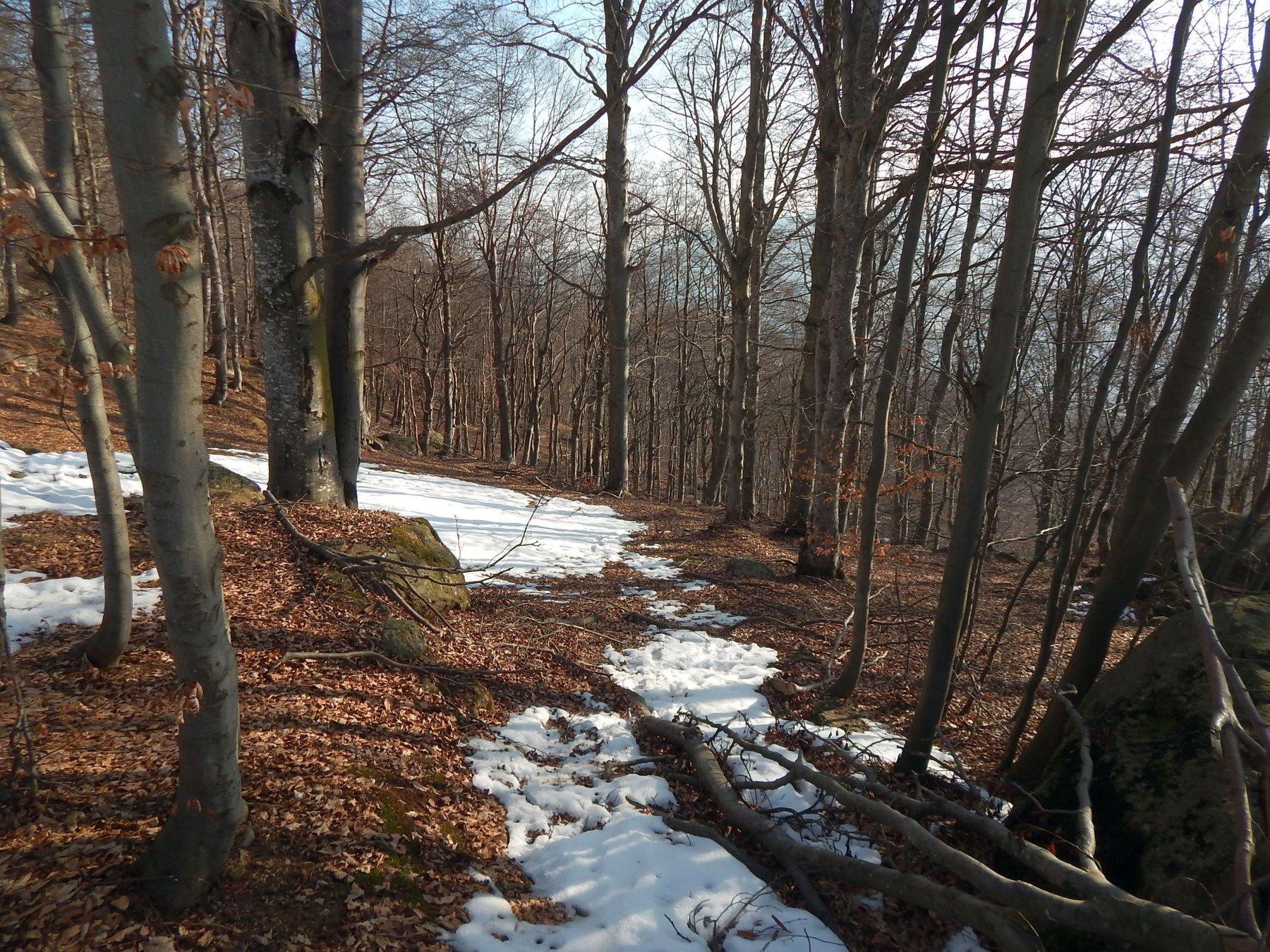 Parte bassa nel bosco