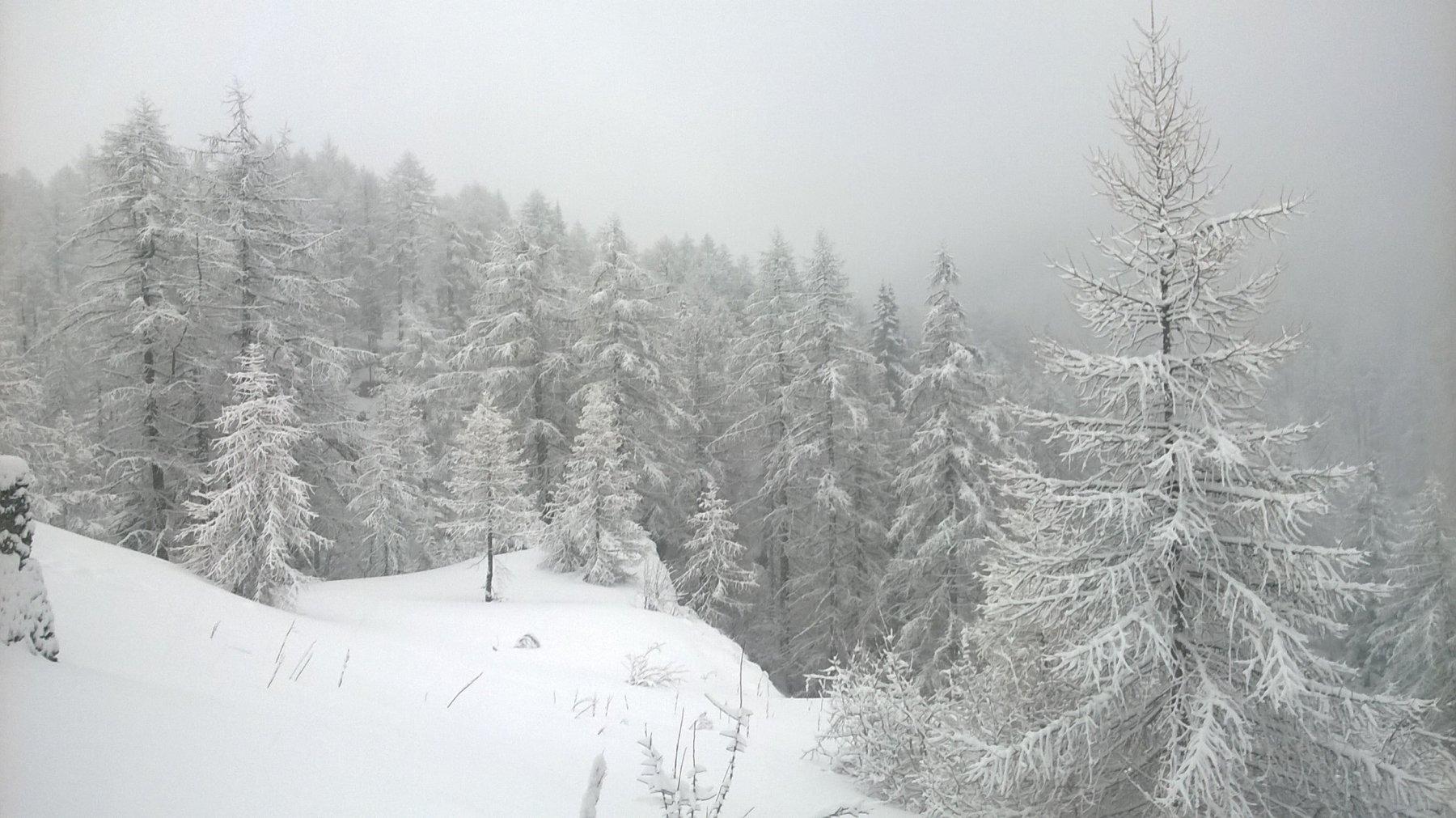 fitta nevicata all'Alpe Devero