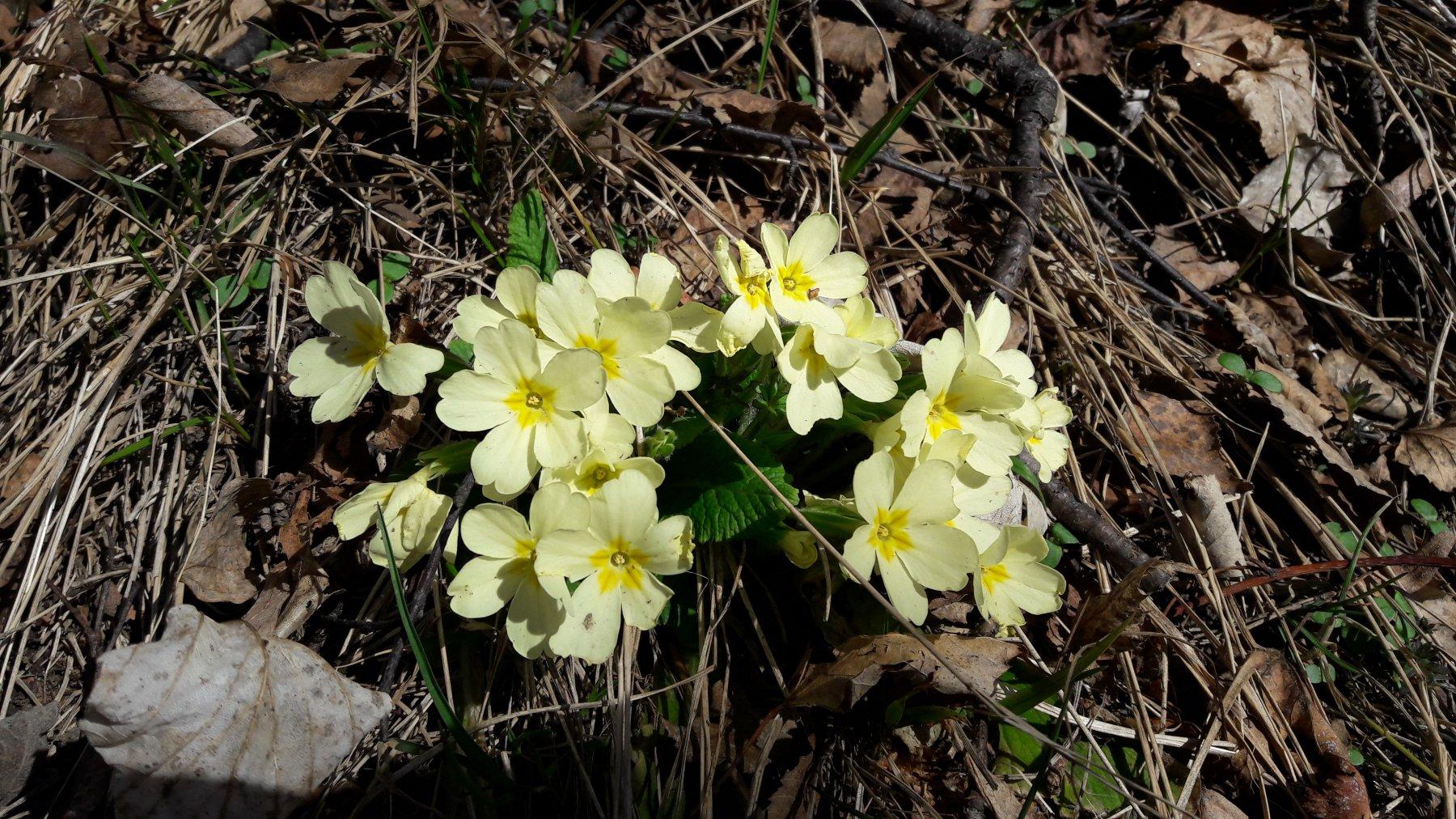 È primavera!