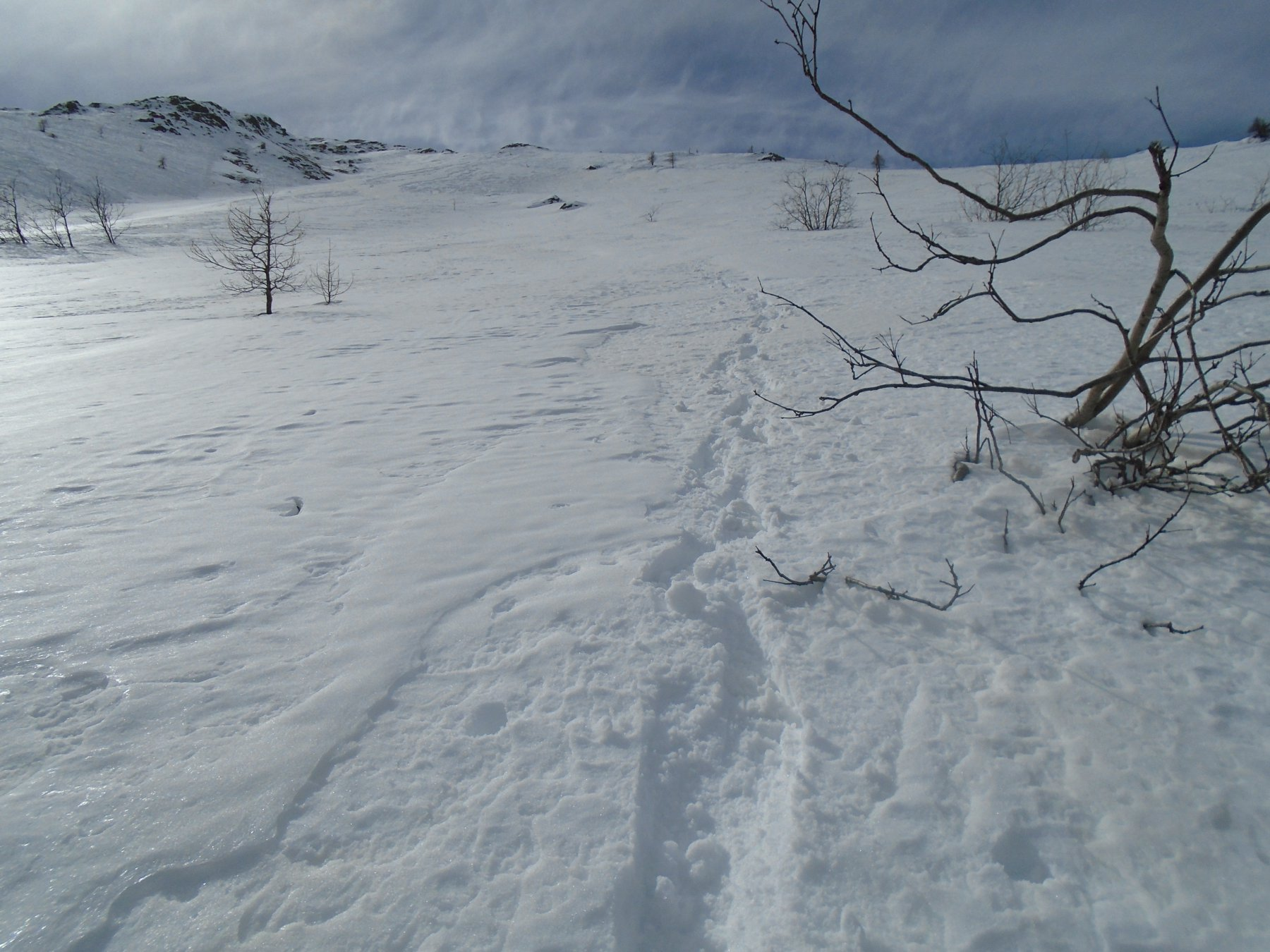 Cercando la neve smollata