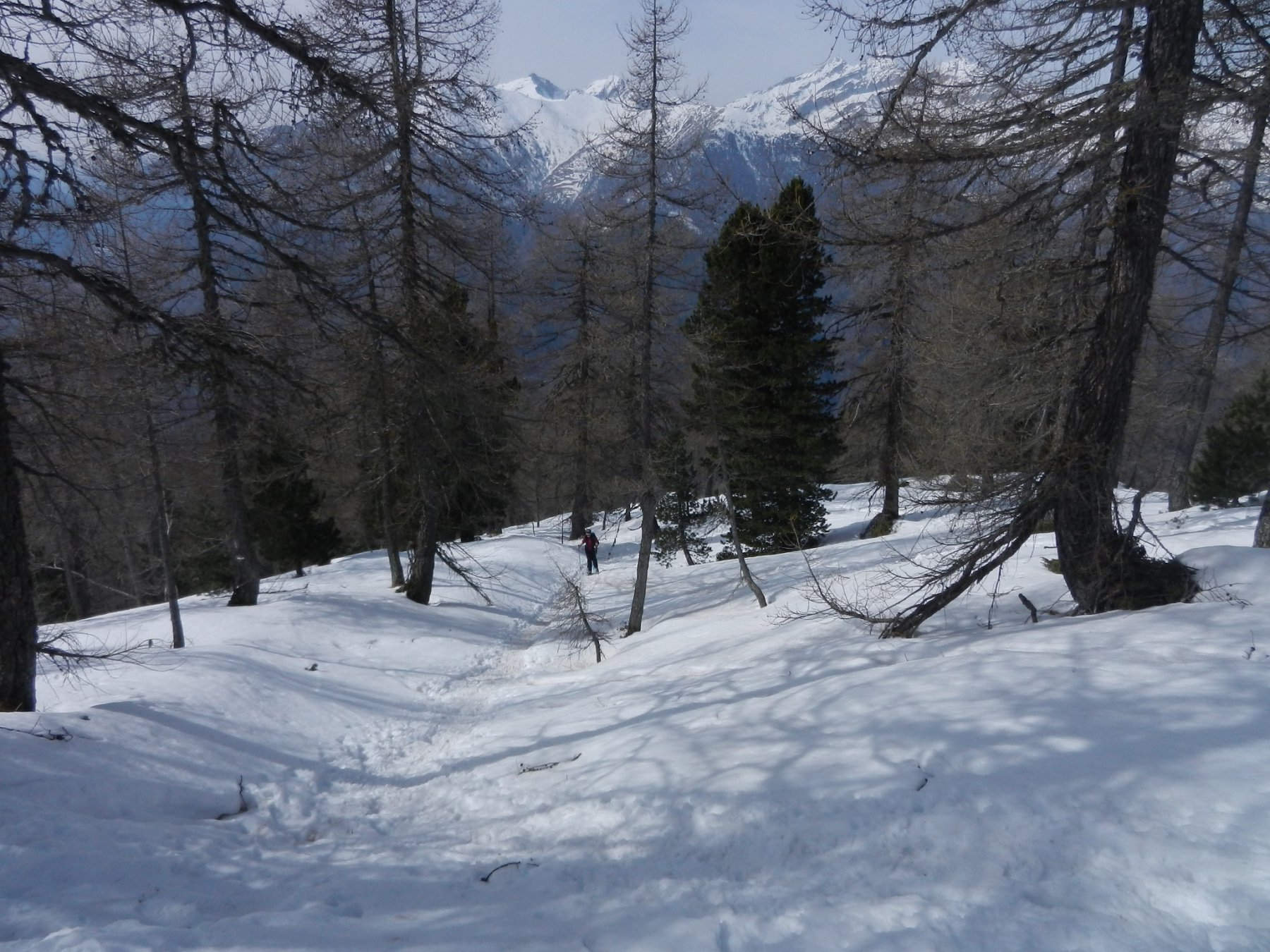 Nel bosco, dall'Alpe Leretta a Punta Leretta