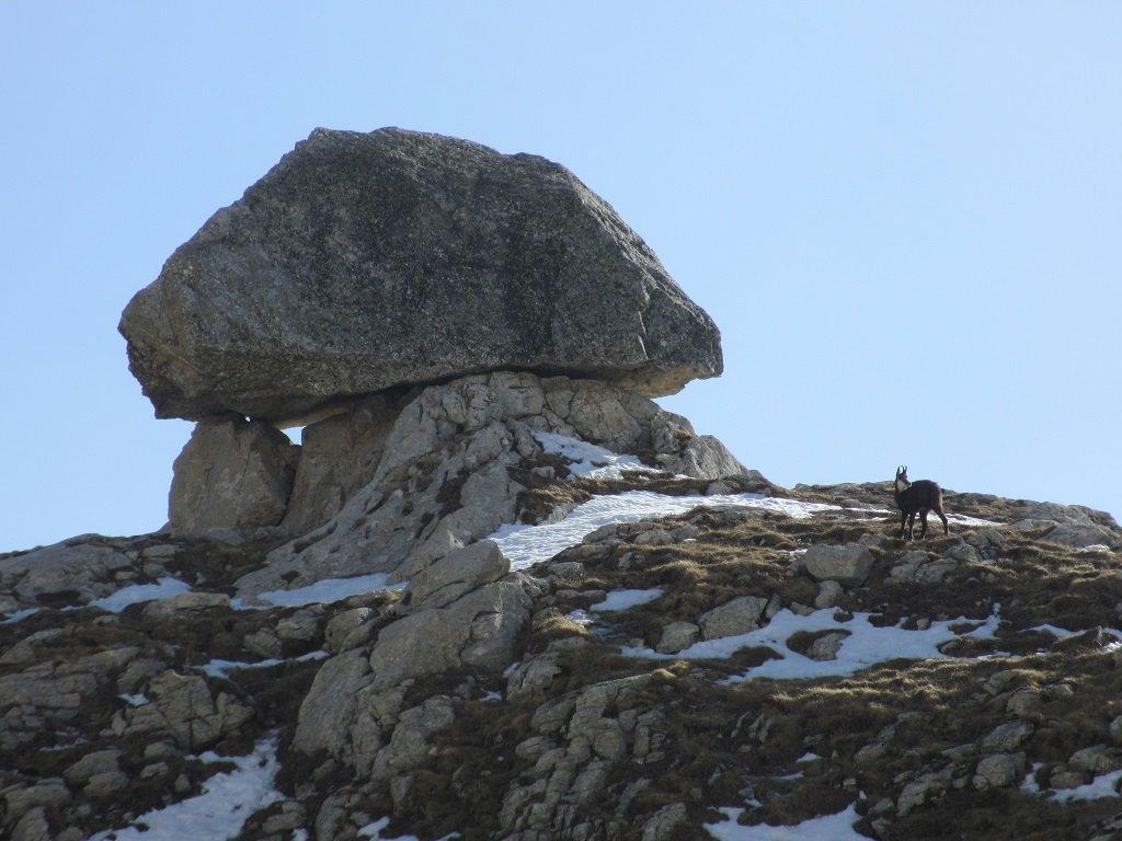 Un bel camoscio al passo Mastrelle, e il masso collocato dal Mago delle Vette