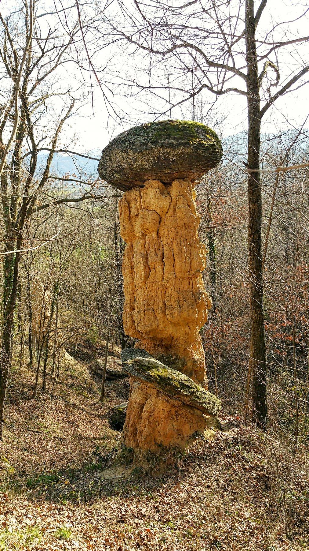 Fungo di pietra.