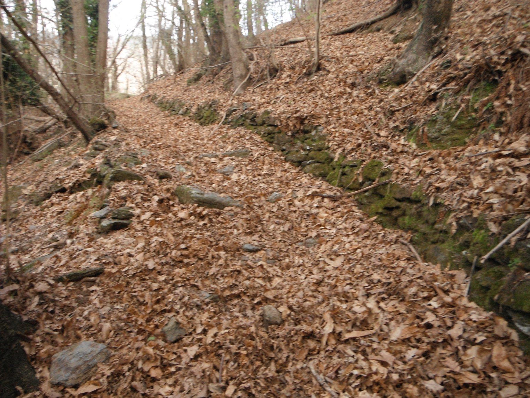 Il sentiero sopra Alpicella