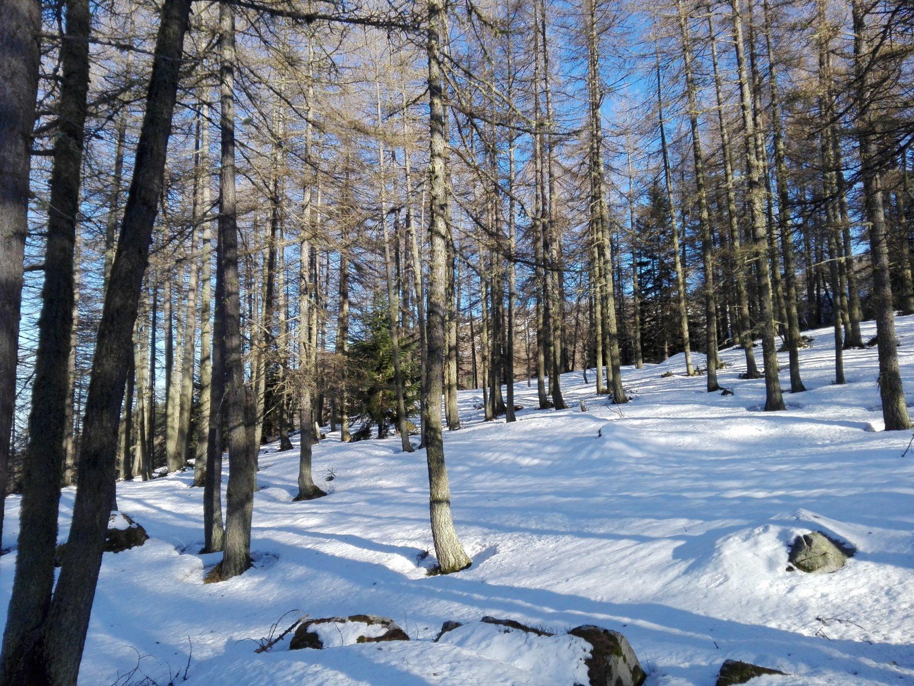 Parte bassa del bosco delle Navette